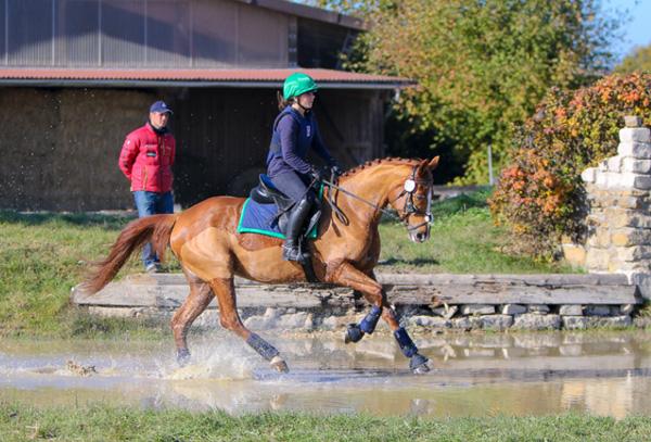 Ausbildung junger Vielseitigkeitspferde